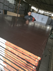 12mm Brown Film Faced Plywood Poplar Core Two Time Hotpressed