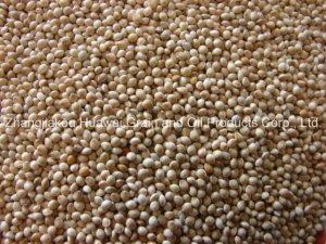 White Broomcorn Millet