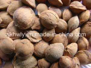 Bitter Almond in Shell