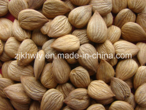 Sweet Almond (youyi 680 PCS/500g)