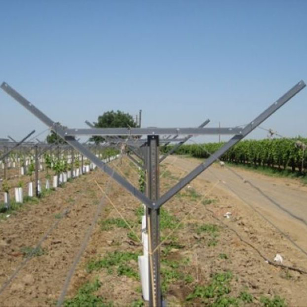 2 5mm Thickness Orchard Plantations Vine Plants Hot Dipped