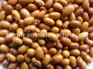 Brown Kidney Beans