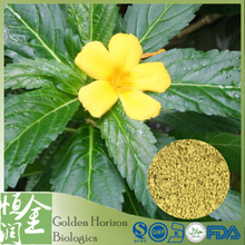 100% Natural Herbal Sex Medicine Damiana Leaf Extract Powder