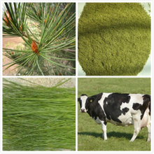 High Quality Pine Needle Powder Productivity