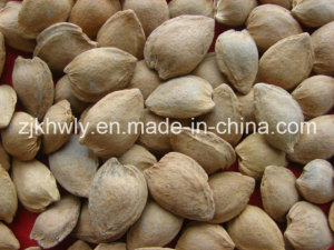 Sweet Almond in Shell (longwangmao 15-17mm)