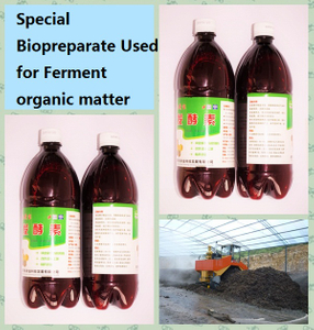 seaweed bio organic ferment used for disposing organic matters