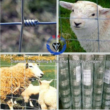 field fence for sheep