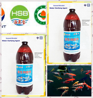 seaweed biobaterial agent for purifying Aquaculture water