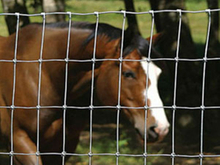 Cattle fence/Cheap farm fencing