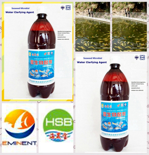 -seaweed bio bcaterial agent water purifier for aquaculture water purifying