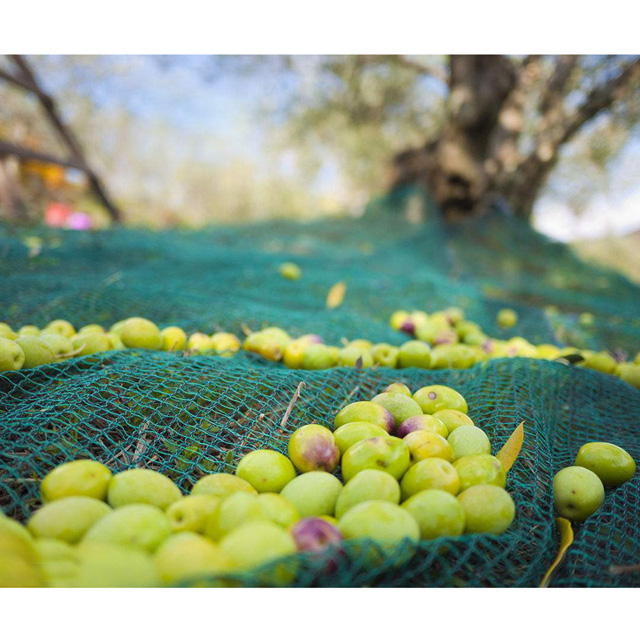 HDPE 45gsm green color olive net/Harvesting net