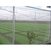 HDPE 60gsm transparent or other color anti hail net