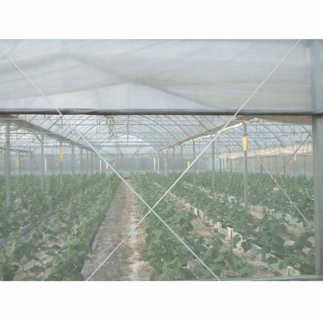 HDPE 100gsm transparent white color or other color Anti Insect Net