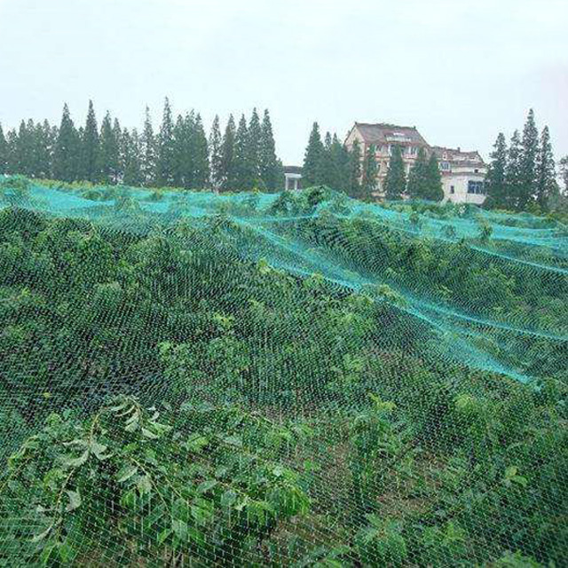 HDPE 8gsm 5X3M green color Anti Bird Net