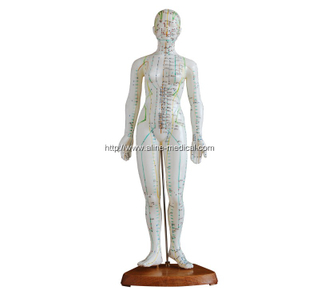Acupuncture Model 48CM Female