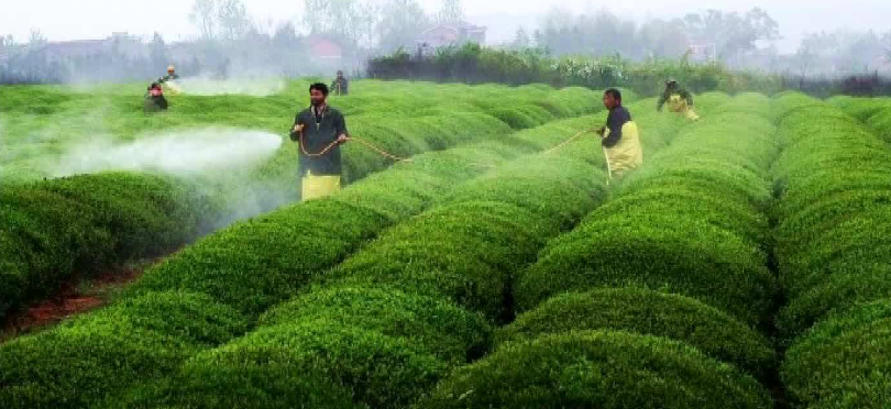 China intends to prohibit, restrict five pesticides, including endosulfan